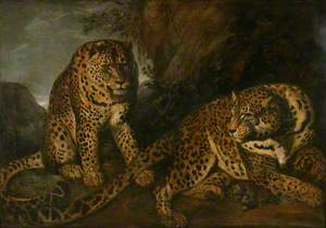 The Leopards