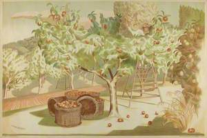 Orchard of Apple Trees at Harvest Time*