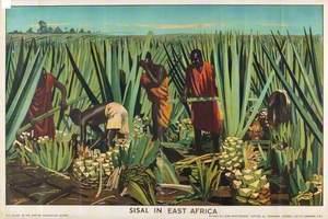 Sisal in East Africa