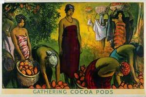 Gathering Cocoa Pods