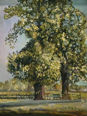 Trees, Richmond Park, Surrey