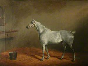 'Hunter' in a Stable