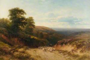 Scene in Hampshire