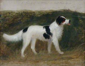 'Cato', Property of the Right Honourable Sir Robert Peel, Bt