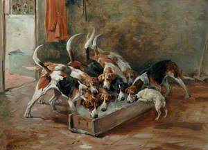 Hounds Feeding