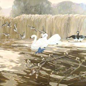 Swans and Kingfisher