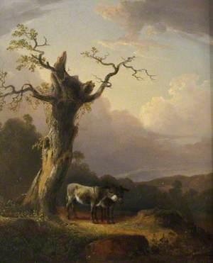 Donkeys in Landscape