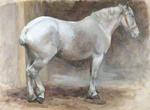 Grey Cob