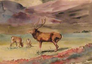 Study of Deer in Cumbrian Hills
