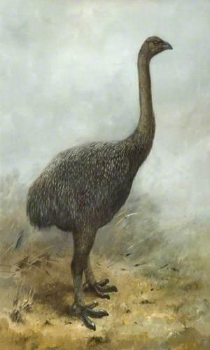 Moa (megalapteryx huttoni)