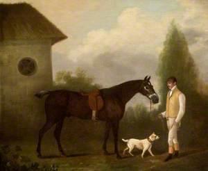 Groom Holding a Bay Horse