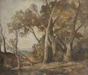 A Composition of Forest Trees