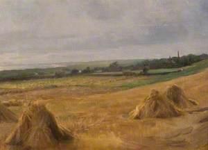 Cornfield, towards the Gower