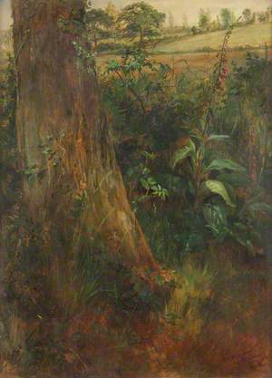 Tree Trunk and Foxglove