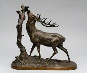 Deer Browsing