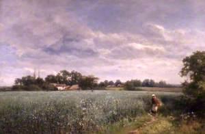 A Bean Field at Pickersleigh, near Malvern, Worcestershire