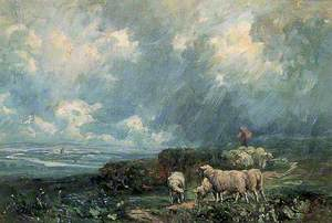 Sheep in a Storm
