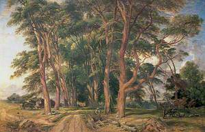 Avenue of Fir Trees at Shoesmith's Farm, Wadhurst, East Sussex