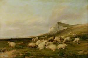 Sheep on the Kentish Coast