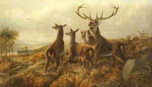 Startled Deer in a Landscape