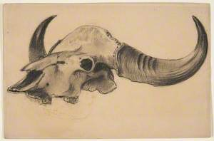 Cow or Bison Skull