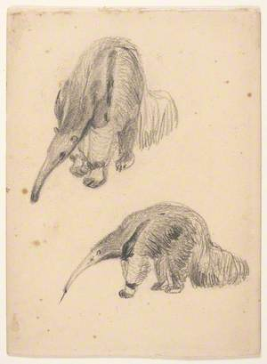 Two Anteaters