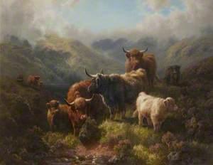 Highland Cattle – Loch Long, Argyllshire