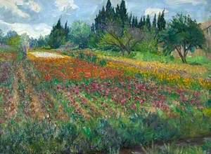 Flower Farm, near Arles, France