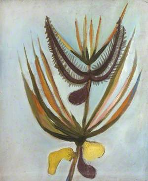 Blackboy Flower