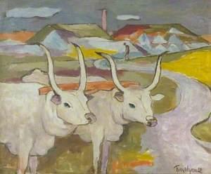 White Oxen