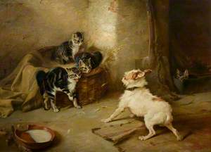 Kittens and a Dog