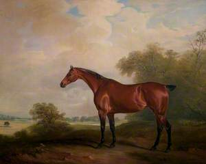 Mr Green's Bay Mare