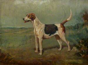 Quorn Hound 'Wonderful'
