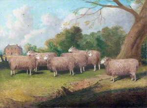 Six Lincolnshire Longwool Sheep