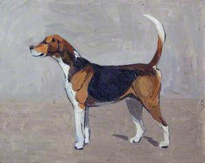 Cottesmore Guider Hound