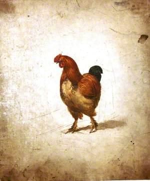 Study of a Cockerel