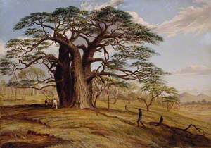 A Baobab near the Bank of the Lue