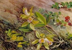 Orchids and Creeper on Water-Worn Boulders in the Bay of Rio Janeiro, Brazil