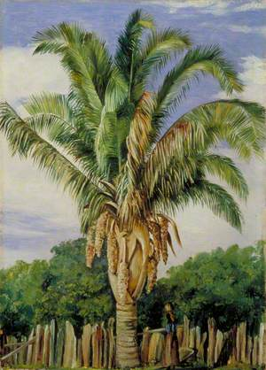 Indian Palm at Sette, Lagoa, Brazil