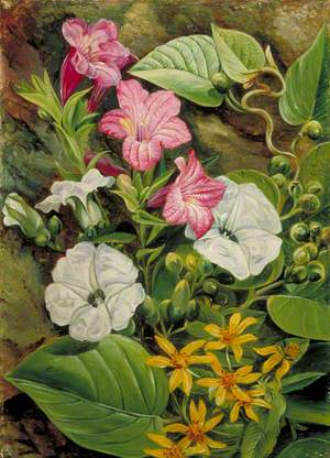 Some Brazilian Flowers