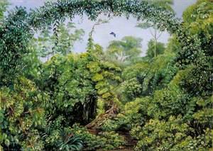 Butterflies' Road through Gongo Forest, Brazil
