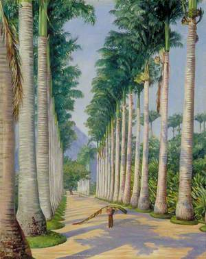 Side Avenue of Royal Palms at Botafogo, Brazil