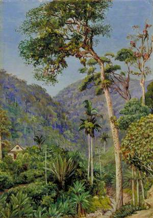 Glimpse of Mr Weilhorn's House at Petropolis, Brazil