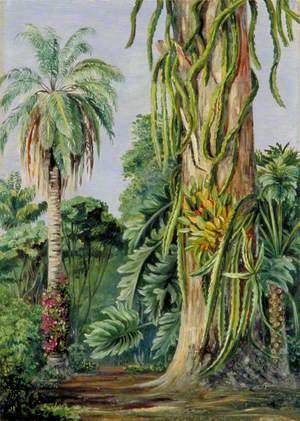 Scene in Dr Lund's Garden at Lagoa Santa, Brazil