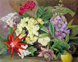 Cultivated Flowers, Painted in Jamaica