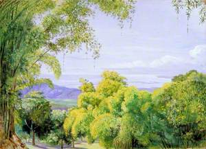 View over Port Royal, Jamaica, with Bamboos in the Foreground
