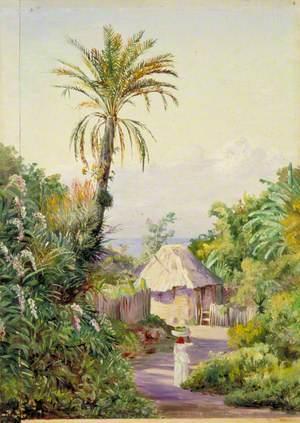 Date Palm and Negro Hut near Craigton, Jamaica