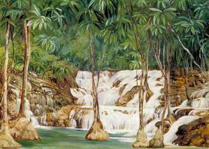 One of the Sources of the Roaring River, Jamaica