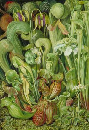 North American Carnivorous Plants