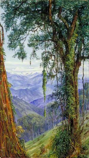 View from Rungaroon near Darjeeling, India